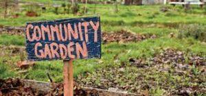 Community Garden Image 2