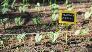 Community Garden Image 3