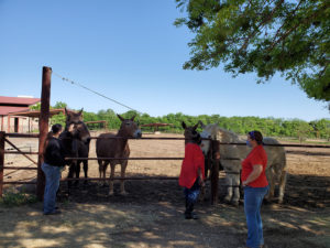 Equestrian Therapy Image 1