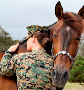 Equestrian Therapy Image 13