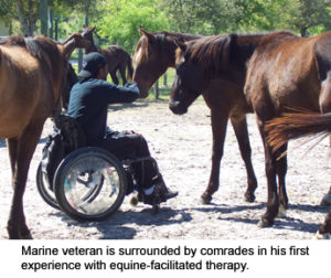 Equestrian Therapy Image 14