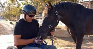 Equestrian Therapy Image 15