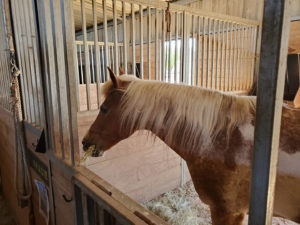 Equestrian Therapy Image 4