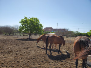 Equestrian Therapy Image 6