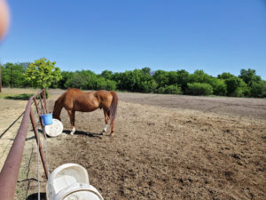 Equestrian Therapy Image 7