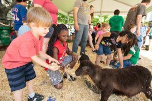 Petting Zoo Image 1