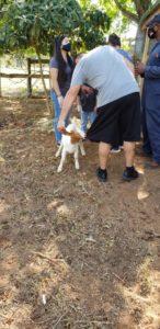Petting Zoo Image 2