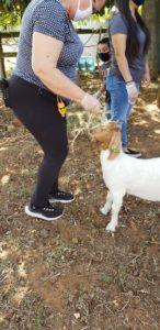 Petting Zoo Image 3